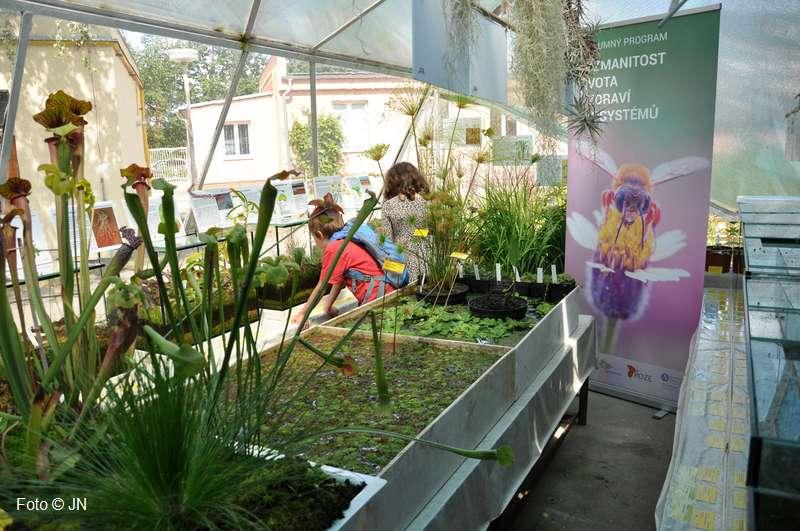 Výstava: Zajímavé vodní a masožravé rostliny z celého světa v akváriích 2017