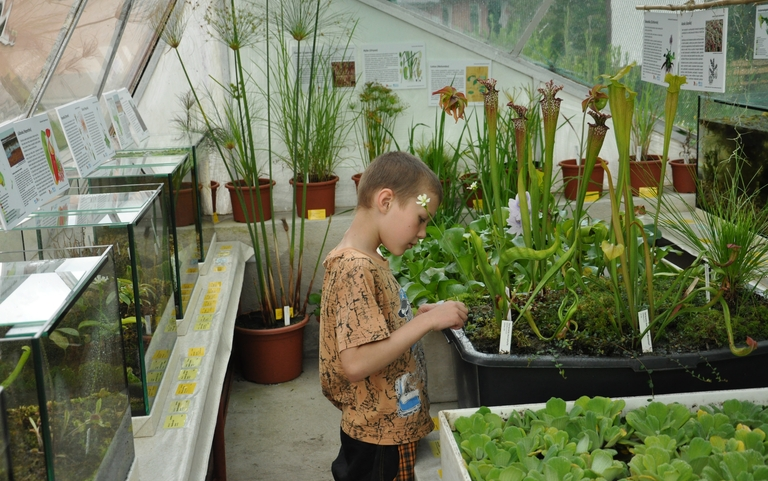 Interessante Wasser- und fleischfressende Pflanzen aus der ganzen Welt in Aquarien