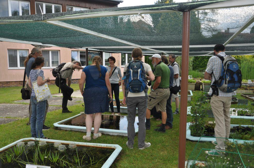 Diskuze nad kultivací ohrožených vodních rostlin