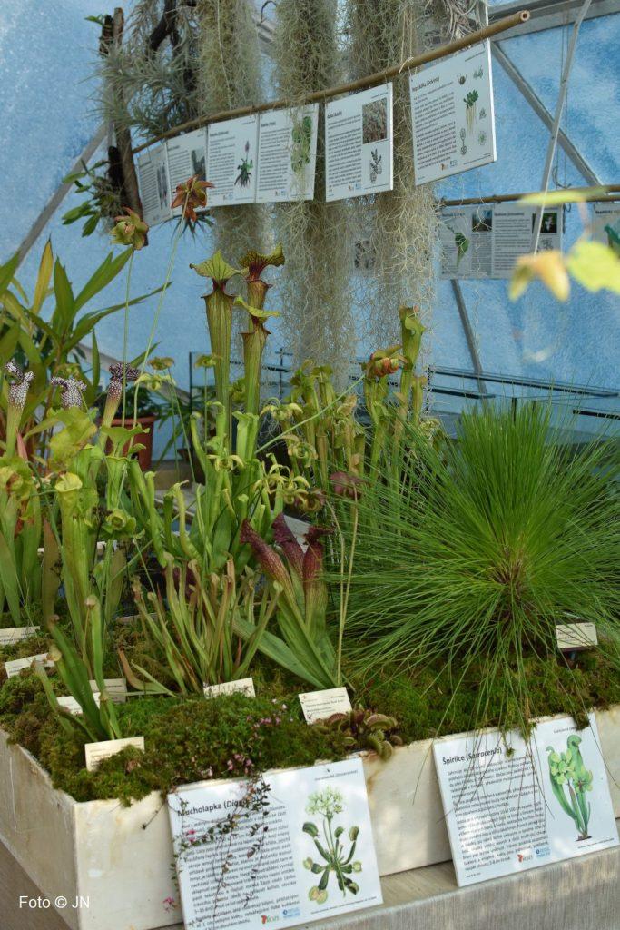 Botanická zahrada Třeboň