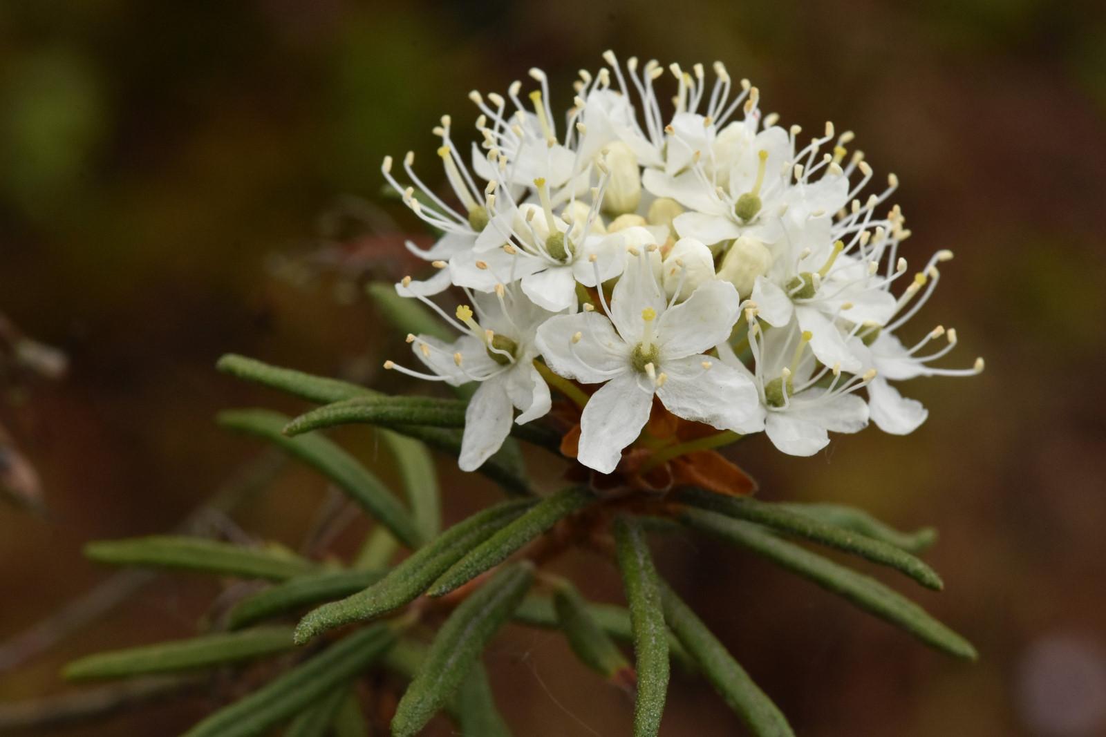Botanická zahrada Třeboň je v plném květu
